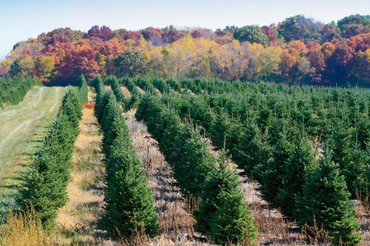 Fresh Cuts Christmas Tree Enhancer