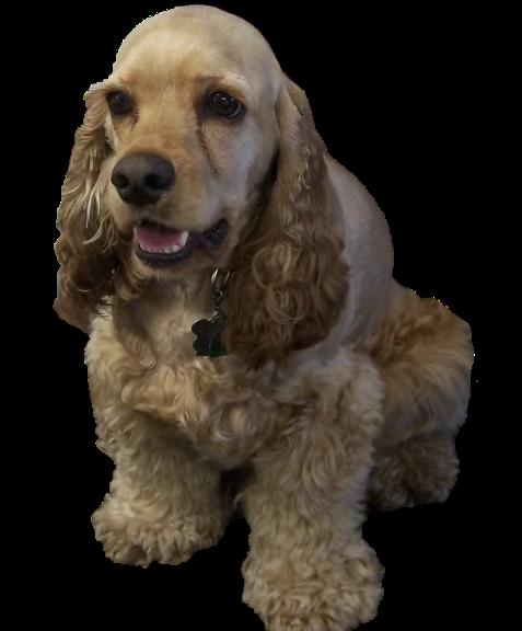 Buster Pet Dog